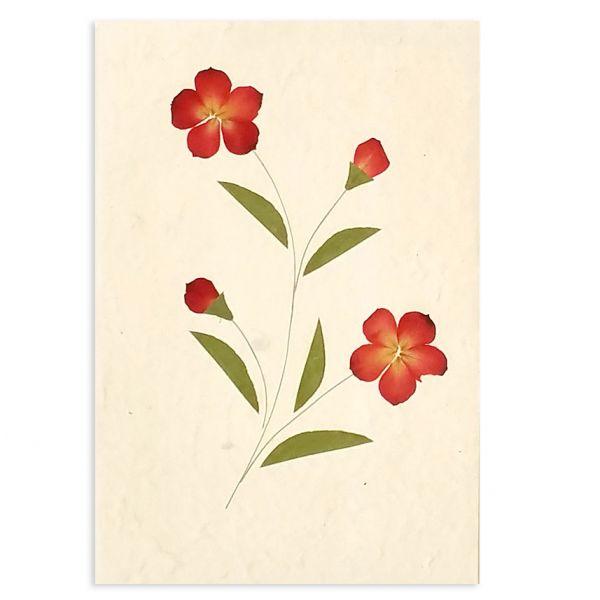 SAA-Grusskarte mit echten Blüten | Motiv Nr. 63
