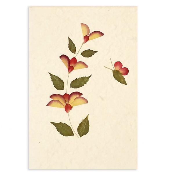SAA-Grusskarte mit echten Blüten   Motiv Nr.13