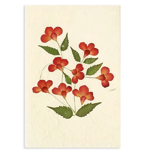 SAA-Grusskarte mit echten Blüten | Motiv Nr.10