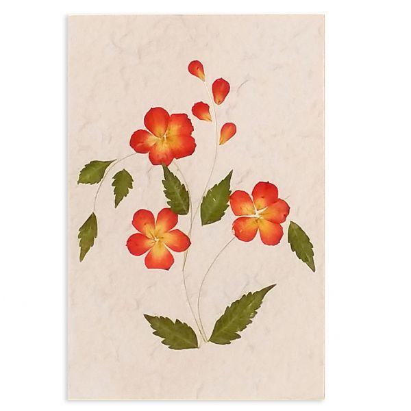 SAA-Grusskarte mit echten Blüten | Motiv Nr. 32