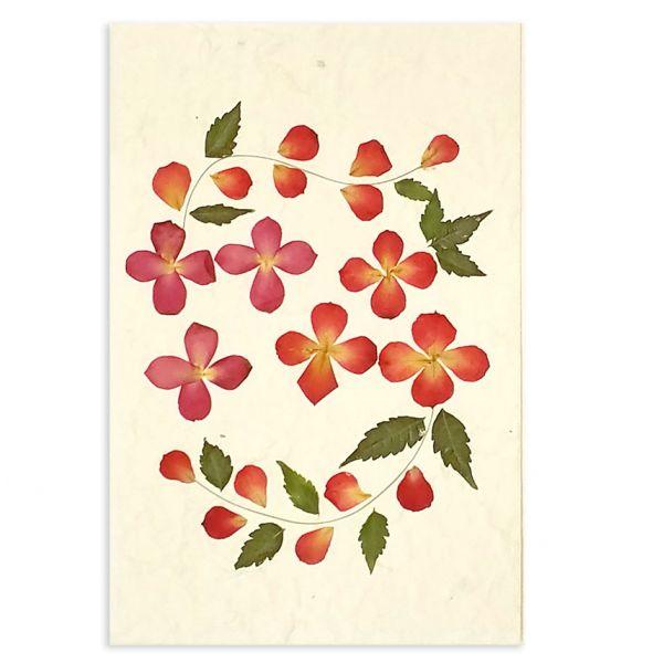 SAA-Grusskarte mit echten Blüten | Motiv Nr. 54