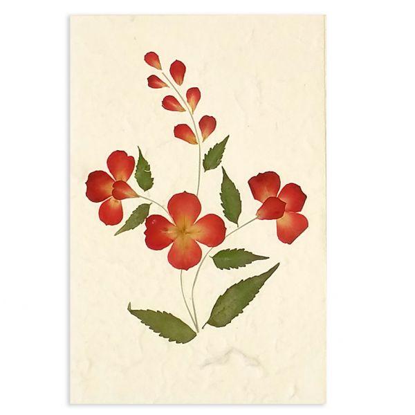 SAA-Grusskarte mit echten Blüten | Motiv Nr. 24