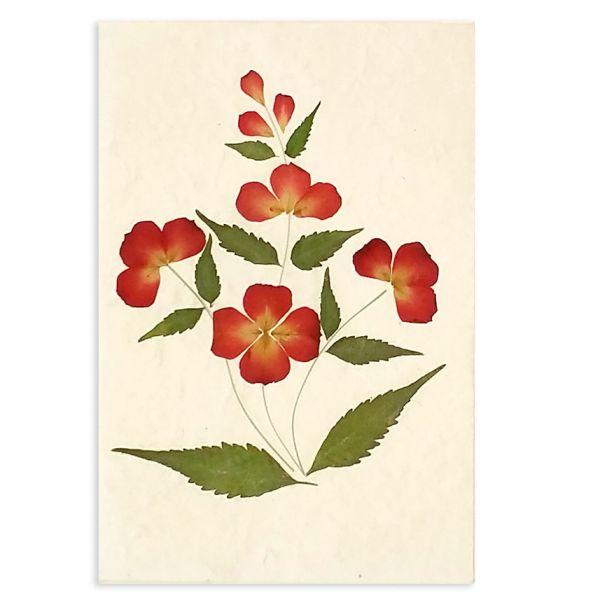 SAA-Grusskarte mit echten Blüten | Motiv Nr.17