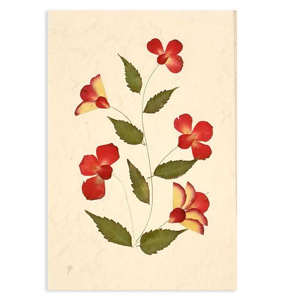 SAA-Grusskarte mit echten Blüten | Motiv Nr. 43