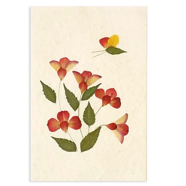 SAA-Grusskarte mit echten Blüten | Motiv Nr.18